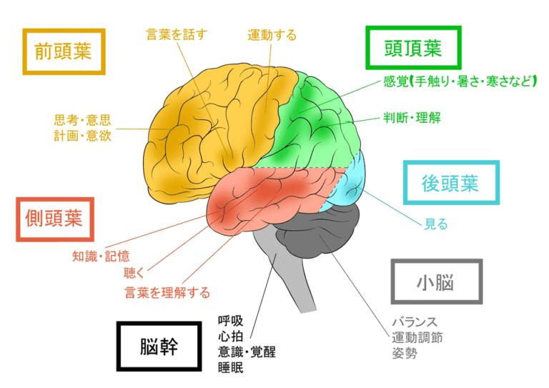 脳の各部位が司る機能